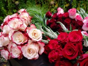 Rose, molte rose